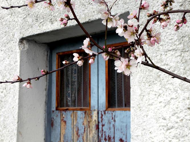 printemps1.jpg