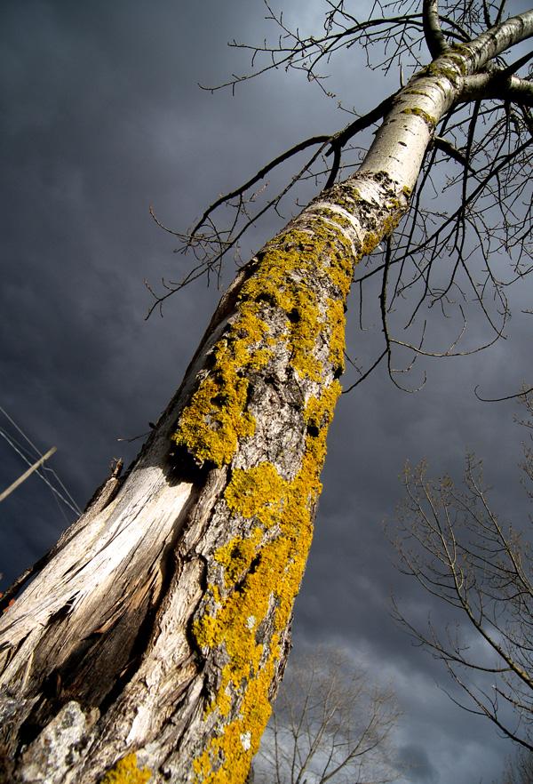 arbre1.jpg