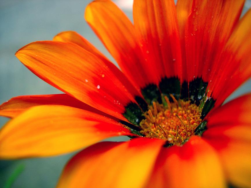 fleur2.jpg
