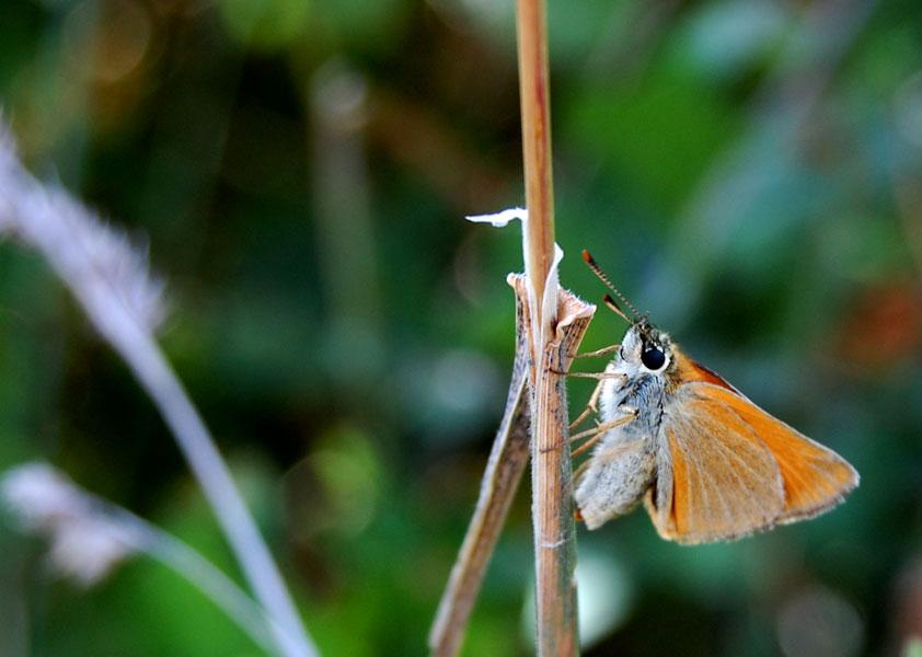 papillon11.jpg