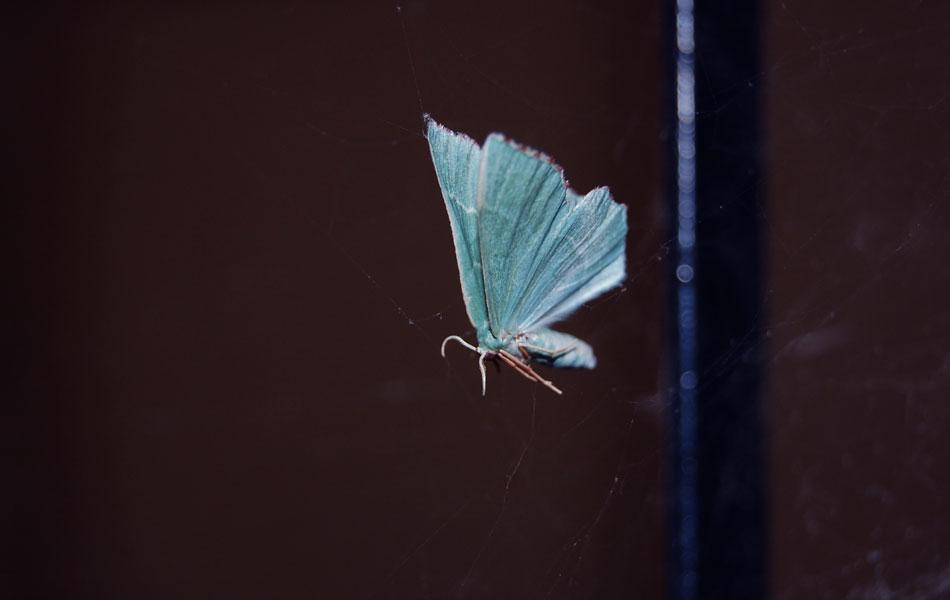 papillonvert1.jpg