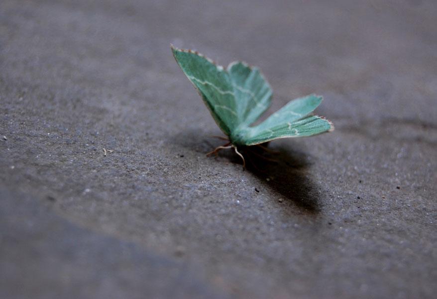 papillonvert21.jpg