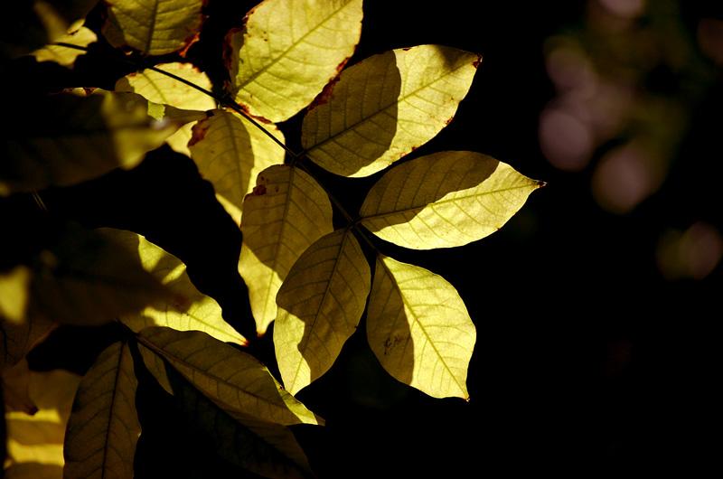 automne5.jpg
